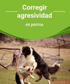 Corregir agresividad en perros - Mis animales  Uno de los problemas que podemos tener cuando tenemos una mascota es tener que enfrentarnos a la agresividad en perros, te contamos cómo corregirla.