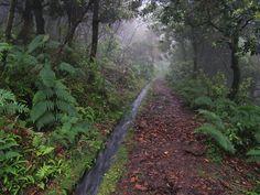 Levada dos Cedros. Ilha da Madeira.