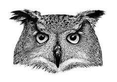 SOWA  OWL  PRINT by PODOLSKASTUDIOS on Etsy