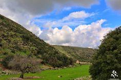 Good morning from our green fields in south lebanon صباح الخير من  السهل الأخضر ب وادي السلوقي By Bassem Yassine - Bassem yassine - Photography  #Lebanon #WeAreLebanon