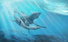 Prehistoric Animals, Free Prints, Reptiles, Fossil, Whale, Extinct, Dinosaurs, Pictures, Posts