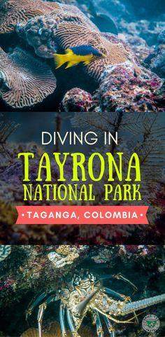 Interested in diving in Colombia? In this post we share our diving experience at the Tayrona National Park, in Taganga, Colombia, the best diving spots and the best time to dive,