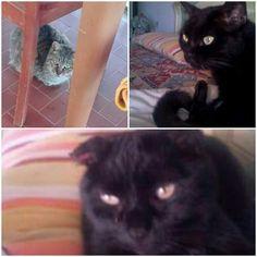 ADOZIONE URGENTE per 3 MICI SFRATTATI AIUTIAMOLI VI PREGO! HELP - questi 3 gatti, NERONE 7 anni, NERINA 5 anni e MICIA 9 anni, tutti STERILIZZATI, stanno per finire in gattile, la loro famiglia è stata sfrattata e nella nuova casa non vogliono animali. Loro sono disperati perchè sono abituati al divano e in gattile soffrirebbero moltissimo. Aiutatemi ad aiutarli condividete e troviamo una famiglia a questi gatti.  INFO 3341789419 Si danno anche divisi ROMA FIUMICINO