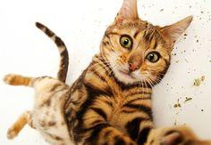Americana flagra cães e gatos em momentos inesperados e faz fotos incomuns dos bichinhos