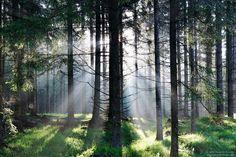 Auf dem Weg zur Drachenwand am Mondsee im Salzburger Land - Waldzauber! Der frische Wald im Gegenlicht. Bokeh, Austria, Instagram, Plants, Motto, Macro Shots, Morning Light, Long Exposure, Plant