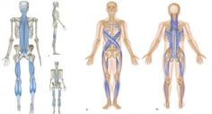 Personal Training Dublin Wild Geese Fitness Training Page 3 - - jpeg Back Stretches For Pain, Back Pain, Spiral Line, Medical Massage, Trigger Point Therapy, Yoga Anatomy, Sports Massage, Massage Tools, Trigger Points