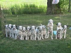 My puppies litter <3 mine's the far right