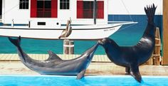Gulf World Marine Park in #PanamaCityBeach creates memories for your entire family. You'll see animal shows, fascinating exhibits and you'll experience hands-on interaction with the animals.