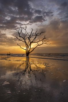 ~~Boneyard Sunrise ~ Botany Bay, Edisto Island, South Carolina by Joseph Rossbach~~ Beautiful World, Beautiful Images, Beautiful Scenery, Beautiful Sunset, Cool Pictures, Cool Photos, Amazing Photos, Edisto Beach, Edisto Island