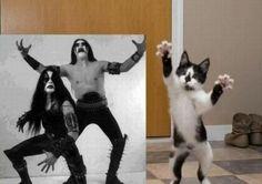 Black metal kittie
