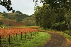 6 Great Bike Rides in Napa Valley