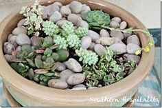 Succulent tabletop garden for Lowes Creative Ideas.  #lowescreator #succulents