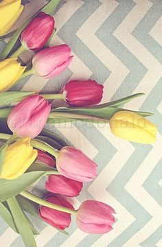 Tulips and Chevrons - Photographic Print