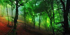 "Jungle Light - European Jungle <a href=""http://instagram.com/kilianschoenberger/"">@kilianschoenberger I N S T A G R A M</a>  <a href=""https://www.facebook.com/pages/Landscape-Photography-by-Kilian-Schoenberger/304631876263547"">L A N D S C A P E   P H O T O G R A P H Y facebook</a>"