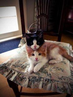 Double-decker kittens.