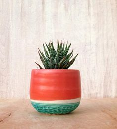 Coral Line Stoneware Planter for succulents Cacti And Succulents, Planting Succulents, Planting Flowers, Indoor Garden, Garden Plants, Indoor Plants, Potted Plants, Cactus Planta, Cactus Y Suculentas