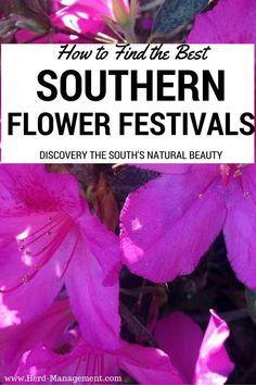 Looking for the Best Southern Flower Festivals?! This article has it covered. Check out the beautiful floral extravaganzas that will be taking place in the Southern USA this Spring! Gardening Inspiration and Travel rolled into one!