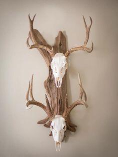 How to Make A Deer Antler Chandelier Deer Skull Decor, Deer Hunting Decor, Deer Head Decor, Antler Wall Decor, Taxidermy Decor, Painted Deer Skulls, Taxidermy Display, Antler Art, Deer Mount Decor