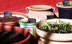 Wysiewanie nasion - przygotowywanie rozsad w domu | http://ZielonaTerapia.pl/blog/wysiewanie-nasion-przygotowywanie-rozsad-w-domu