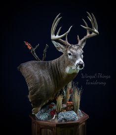 #wings&thingstaxidermy #whitetailpedestal ##wingsandthingstaxidermy Taxidermy Display, Big Deer, Deer Mounts, Trophy Rooms, Deer Skulls, Antlers, Deer Heads, Hunting, My Arts