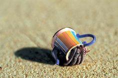 """MYT© on Twitter: """"Los cangrejos ermitaños tienen la habilidad de usar como…"""