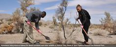 Restoring Land to Protect Joshua Tree National Park