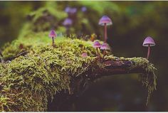 Purple fungi!  Follow @ecoconltd for more inspiring posts!  -  Want to be featured? Use the hashtag #ecoconftme :)  @forest_of_twinkling_fireflies