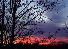 Wschód Słońca, Niebo, Drzewo