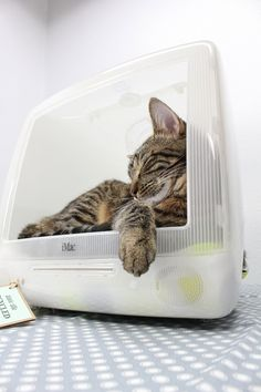 Nerd alert! I'm in love with this -- For all of the Apple fanatics out there, here's a way to give your cat a cozy sleeping nook, while paying homage to the great Steve Jobs.