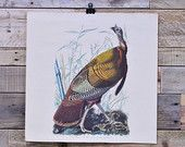 Large Vintage Audubon Print, 1950s Audubon Turkey, Northwestern Mutual Audubon Male Turkey