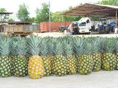 Fairtrade ananas