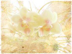 Strukturfoto: Orchidee mit Textur