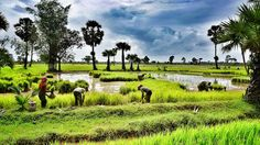 Vietnam Famous Destinations: Cycling tour in Ngoc Son and Pu Luong Nature Reserve 3 days 2 nights Butterfly Species, Nature Reserve, Countryside, Vietnam, Natural Beauty, Golf Courses, Tourism, Cycling, National Parks
