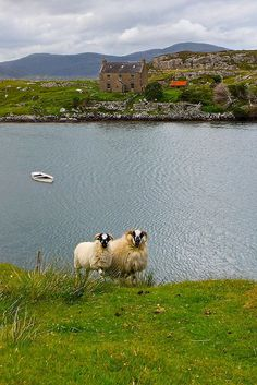 Isle of Harris, Outer Hebrides, Scotland: Sheep on one side house on the other by Photographic View Scotland on Flickr