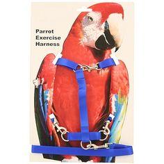 Parrot Essentials Online Store - Parrot and Bird Harness - Medium, £11.99 (https://www.parrotessentials.co.uk/parrot-and-bird-harness-medium/)