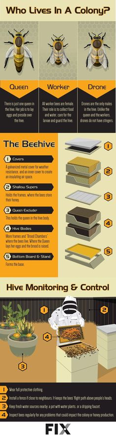 Learn How To Become a Backyard Beekeeper