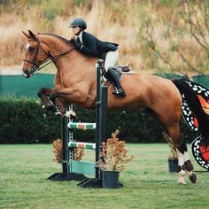 Cute Horses, Pretty Horses, Horse Love, Horse Girl, Beautiful Horses, Show Jumping Horses, Show Horses, Cavalo Wallpaper, Hunter Jumper