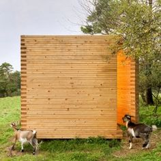 Michael Kühnlein builds a timber barn  for his herd of pygmy goats