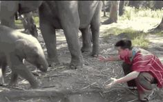 This friend who gives the BEST greetings. | 21 Baby Elephants Who Are The Life Of The Party