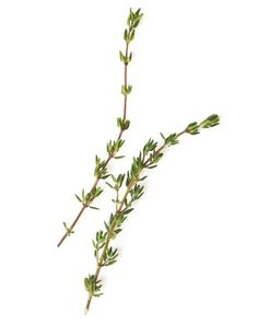 """See the """"Oregano, Thyme & Rosemary Steam"""" in our Medicinal Uses for Herbs  gallery"""