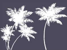 Palm / Coconut Tree vector art – Download CorelDraw Palm Tree