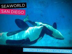 SeaWorld ~ Greater San Diego, California