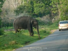 Enjoy the journey and savor the sights...Travels in India from masalaherb.com