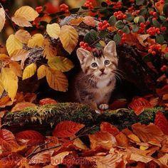 Journal d'art Québec: Appel de créations septembre 2020 Tier Wallpaper, Fall Wallpaper, Fall Cats, Halloween Photos, Cat Colors, Cat Facts, Cat Scratching, Land Art, Autumn Leaves
