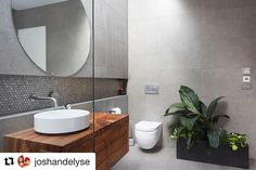 Beaumont Wall + Floor: 1006564 Maxis Warm Grey GL-Proc Rect 450x900 Mosaic: Penny Round Cinder Grey Honed 285x305
