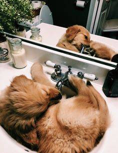 All the things I admire about the Friendly Golden Retriever Pup – Cute Adorable Baby Outfits Cute Funny Animals, Cute Baby Animals, Animals And Pets, Funny Cats, Cute Dogs And Puppies, I Love Dogs, Doggies, Cute Creatures, Animals Beautiful