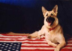 .Happy Memorial Day love www.capemaydogs.com