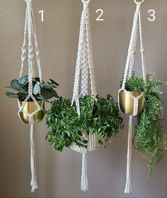 Macrame Plant Hanger Patterns, Macrame Plant Hangers, Macrame Patterns, Hanging Plant Wall, Hanging Planters, Succulent Gardening, Plant Shelves, Macrame Projects, Plant Holders