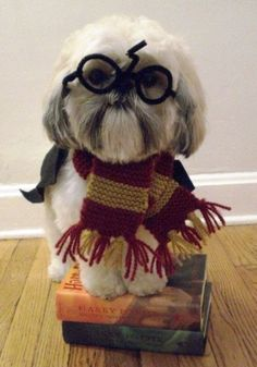 Harry Potter pooch! And more adorable animal pics. to make our day on: http://blog.gifts.com/gift-trends/cute-animal-pictures-to-make-our-day