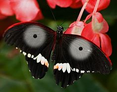 I see you butterfly